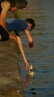 Fisch Kraulen am Kai